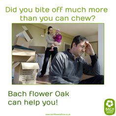 Did you bite off much more than you can chew? Bach flower Oak can help you! #oak #bachflowerremedies #Bachflowers