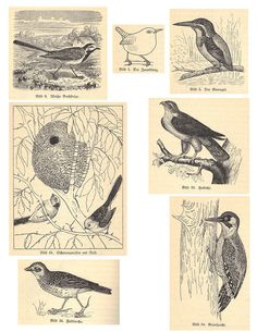 Bird Collage Sheet 1 by OnFoot4now (Didi), via Flickr