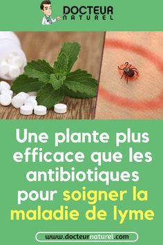 Une plante plus efficace que les antibiotiques pour soigner la maladie de lyme  #lyme  #maladie  #soigner  #antibiotique  #remède Danger, Junk Food, Drugs, Foods, Muscle Soreness, Kidney Cleanse, Urgent Care, Lyme Disease, Food Food