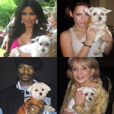 Celebrity Maltese dog owner you may know    There are many celebrity Maltese dogs owners.