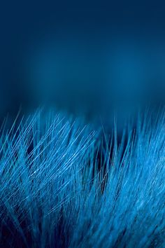 Ideas Royal Blue Aesthetic Wallpaper Iphone For 2020 Kind Of Blue, Blue And White, Art Bleu, Everything Is Blue, Himmelblau, Blue Dream, Blue Wallpapers, Jolie Photo, Blue Aesthetic
