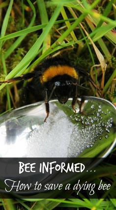 Learn how to give a tired and hungry bee a bit of buzz! When bees carry too much pollen they find it difficult to fly but this sugary potion revives them and helps save the bees... One bee at a time!