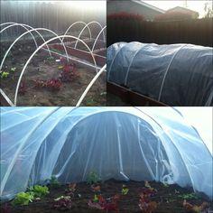 DIY green house. PVC and heavy duty plastic.