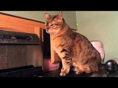 Shady-Ass Cat Gets Pwnd lol