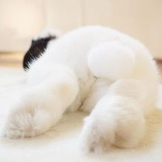 The Daily Bunnies Sleeping Bunny, Funny Bunnies, Baby Bunnies, Cute Bunny, Funny Pets, Lop Bunnies, Dwarf Bunnies, Honey Bunny, Bunny Rabbit