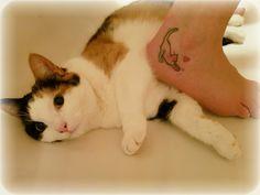 My love ❤ #kitty #cat #cats #catlove #catslover #catsofpicsart  #catsofinstagram #love #tattoo #tattoos #silhouette #cute #foreverlove #baby #mylove