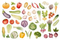 Watercolor vegetable collection by Elena Medvedeva on Creative Market