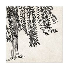 Vintage Black Weeping Willow Tree Graphic