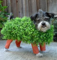 chia pet, my ass!