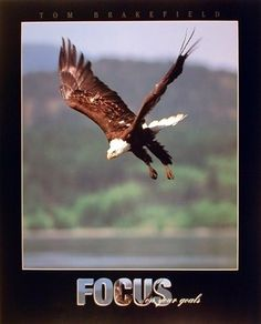 Diving Hunting, Bald Eagle Focus on Your Goals, Bird Anim... https://www.amazon.com/dp/B009IIIYI0/ref=cm_sw_r_pi_dp_x_t3H8xbE8B54YP