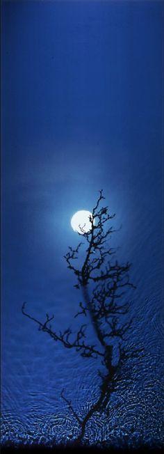 blue moon Beautiful Sky, Evening Sky, 3 Moon, Blue Moon, Blue Skies, Over The Moon, Stars And Moon, Tree Silhouette, Moon Magic