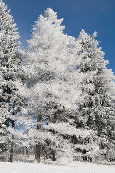 Märchenwald - bosco incantato | Flickr - surom1992