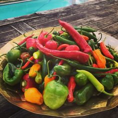 Chillies 🌶 🌶season! A lovely mixture of this beautiful Jewels 💎 most of them coming from Peru 🇵🇪 and Mexico 🇲🇽 Loving preserving them with only Lemons 🍋 and Limes 🍋 juice 😋😋🇵🇪🇵🇪🇵🇪🇵🇪🇵🇪