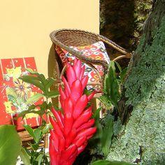 Summer Garden - priky zuccolo art&decor