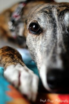 Barnaby Greyhound... not quite wildlife but beautiful nonetheless!