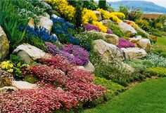 Places, Outdoor Decor, Gardening, Lawn And Garden, Lugares, Horticulture