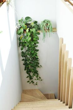 Studio Tour: Arounna + John of Bookhou - interior - Zimmerpflanzen Decor, Plant Life, Stairs, Home, Hanging Plants, Plant Shelves, Home And Garden, Home Decor, House Plants Decor