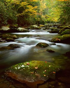 Photographed by Danny Burk, the Jakes Creek, Smoky Mountains wall mural from Murals Your Way will add a distinctive touch to any room. Choose a pre-set size, or customize to your wall. Scenic Wallpaper, Forest Wallpaper, Landscape Photography, Nature Photography, Nature Color Palette, Color Palettes, Mountain Mural, Murals Your Way, Forest Path