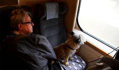 スウェーデンの鉄道では犬も席に座れる超VIP待遇 / 犬も大切な家族の一員