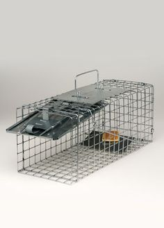 Havahart Squirrel Trap >>>>to get that pesty thing out of the attic.