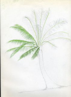 Let's draw palm trees. Great Guide. Easy to follow process.