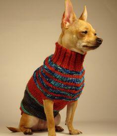 PUNTO DE QUIEBRA  luxury brand la bamba dog sweater