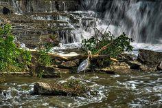 01 Waiting Heron At Glen Falls