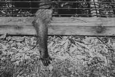 by Natasha Wiseman on Cage, Photography, Photograph, Photography Business, Photoshoot, Fotografie, Fotografia