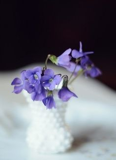 march violets.