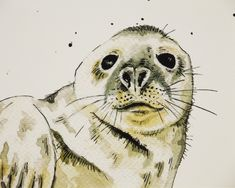 This is an open edition professional quality giclée print of my own ink and watercolour illustration of a grey seal. The perfect gift for seal and wildlife lovers. The print is size - 210 mm x 148 mm (landscape). Your print will be signed in the b. Cute Seals, Polka Dot Background, Landscape Prints, Watercolor Illustration, Watercolour, Rustic Feel, Wildlife Art, Botanical Prints, Wall Art Prints