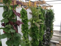 Ideas to Help Build a Spacing Saving Vertical Gardens - Finest DIY Farm Pictures, Garden Pictures, Garden Gates, Garden Beds, Landscape Design, Garden Design, Above Ground Garden, Shade Trees, Spring Is Here
