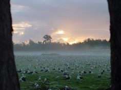 Goonies_In_The_Mist1 Midway Atoll, Beautiful Places To Live, Islands, Tours, River, Mountains, Pictures, Outdoor, Image