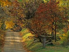 Loudoun County dirt road with a touch of color in the leaves. Fall is here.