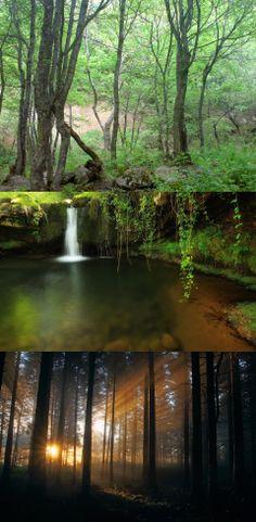 arasbaran forest in iran-tabriz Iran, Nature, Naturaleza, Nature Illustration, Off Grid, Natural