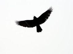 Bird silhouette - tattoo idea