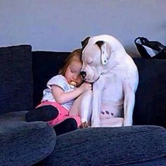 People are so misinformed about Pitbulls. They are the greatest breed ever.I will adopt a pitty of my very own. Dogs And Kids, Animals For Kids, I Love Dogs, Puppy Love, Cute Dogs, Dogs And Puppies, Doggies, Boxer Dogs, Beautiful Dogs