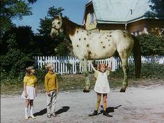Paarden hoefden nog geen schaduw vroeger.