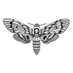 Tattify Detailed Moth Temporary Tattoo - Changeling (Set of Black Line Tattoo, Line Tattoos, Sleeve Tattoos, Moth Tattoo Design, Tattoo Designs, Moth Drawing, Gangsta Tattoos, Tatuagem Old School, Insect Art