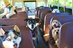My Road Trip Travel Agency: Ταξιδεύοντας με τους μικρούς μας φίλους! First Day Of School, Pets, Dog Life, Dog Days, Puppy Love, Cute Dogs, Dog Lovers, Adoption, Puppies
