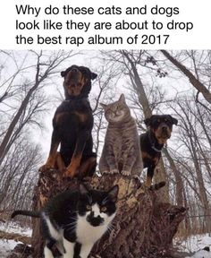Rap cat n dogs