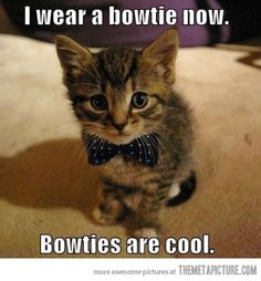 Fun Claw - Funny Cats, Funny Dogs, Funny Animals: Funny Animal Pictures With Captions - 24 Pics. Need bowtie for oli