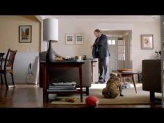 2013 Jetta Commercial: Bad Dog, Good Volkswagen