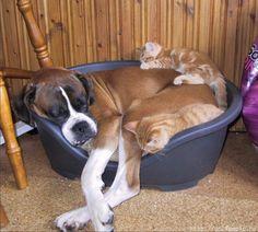Pies i kocięta