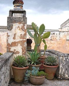 Vera💖-Great rooftop garden option (or anywhere really) Galàtone Salento by Peter Simon