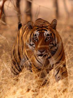 asiatic-wildlife044.jpg (600×800)