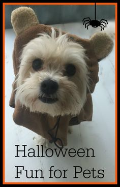 Tips For Halloween Fun With Pets