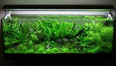 4 Tips for Arranging Plants in a Freshwater Aquarium