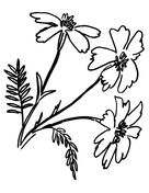 Tagetes Marigolds  Coloring page