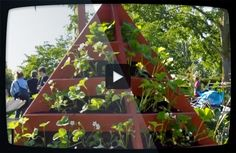 Odla jordgubbar på höjden