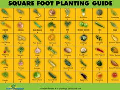 4X4 Sq Ft Gardening
